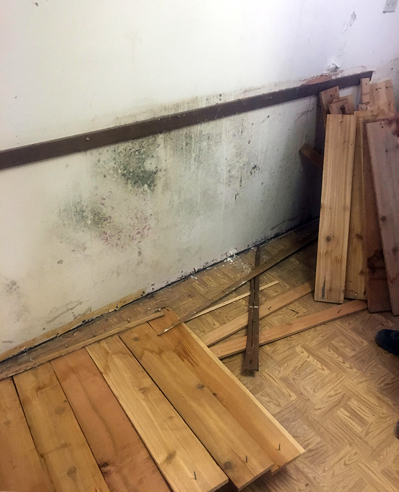 mold remediation and removal   High Desert LLC Construction and Restoration   Cody Wyoming