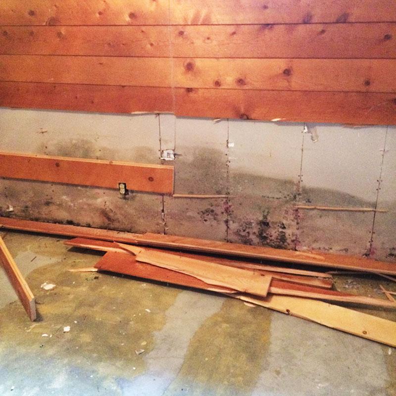 Water & Mold Repair