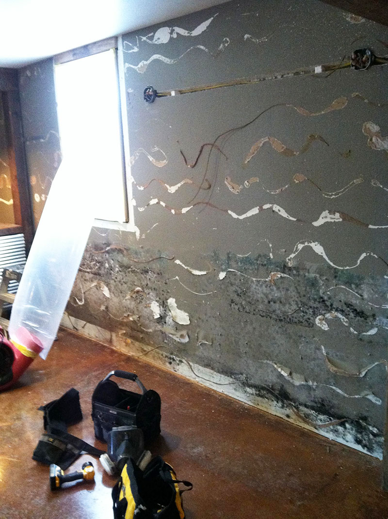 Dryout: Water Damage & Mold